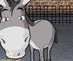 Donkey Gafoor