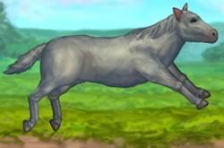 Jogo de Cuidar de Cavalo