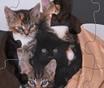 Quebra cabeça com gatos